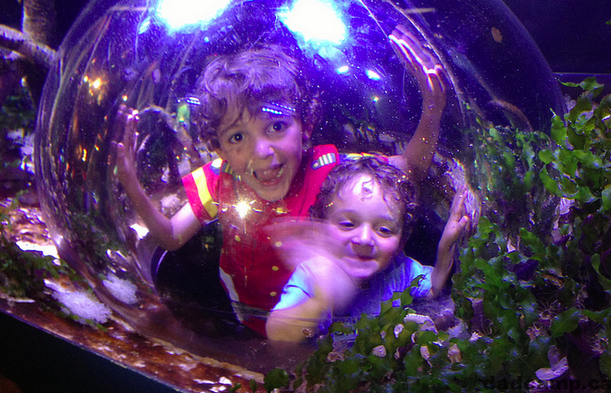 aquarium bubble