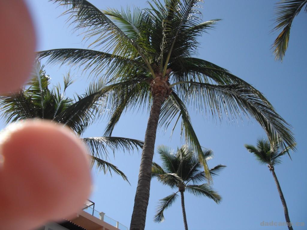 Palm tree in Puerto Vallarta