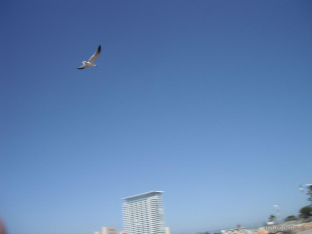 Seagull in Puerto Vallarta