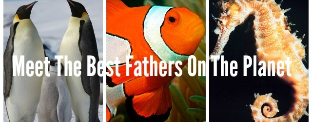 Meet The Best Fathers On The Planet