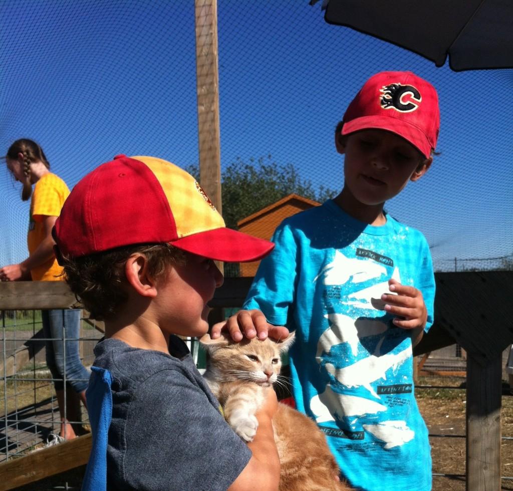 petting zoo Calgary Corn Maze