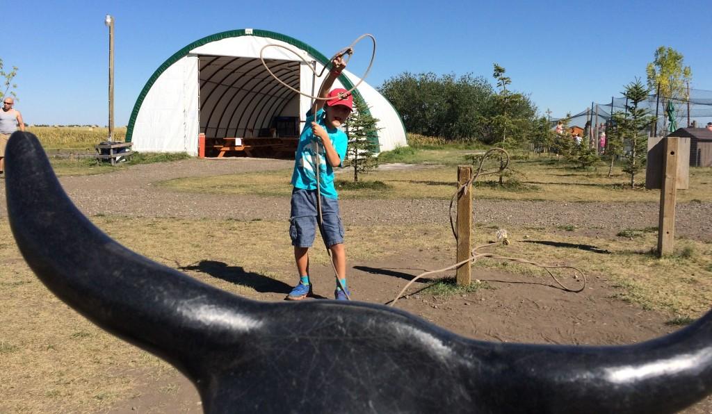 calf roping Calgary Corn Maze