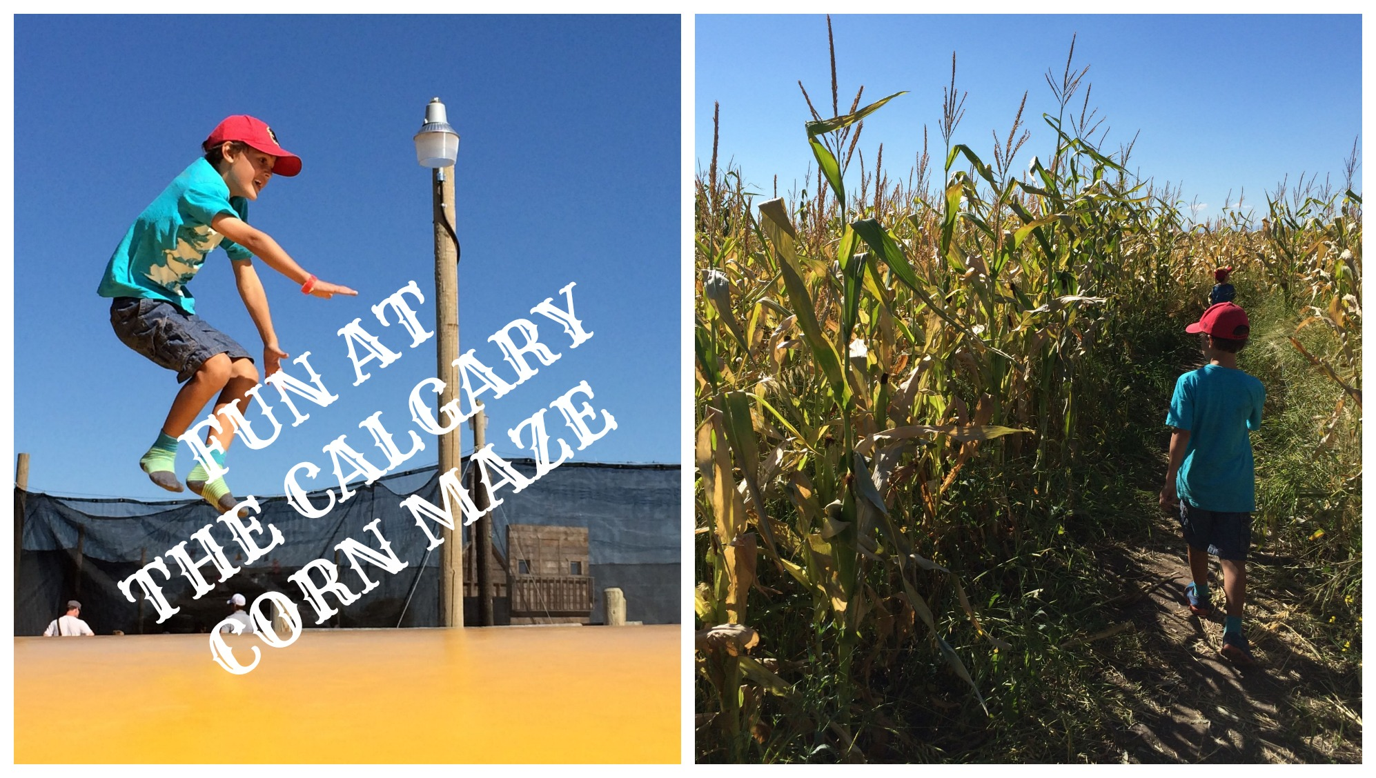 Fun At The Calgary Corn Maze