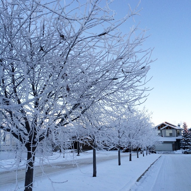 Hoars. #capturecalgary #explorealberta #wearewinter #yyc #cold #hoarfrost #brrrr #winter