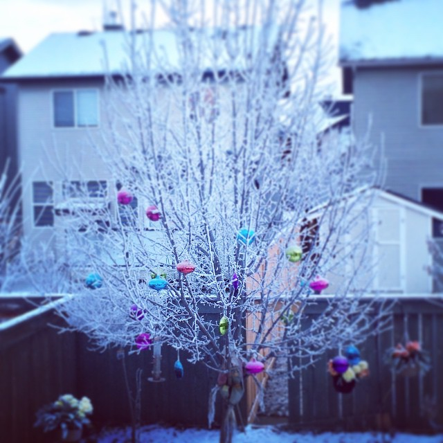 Backyard hoar frost. #tree #decorated #winter #wearewinter #christmas #christmastree #decorations