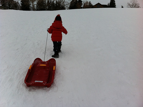 Tobogganing Bans Growing in North America