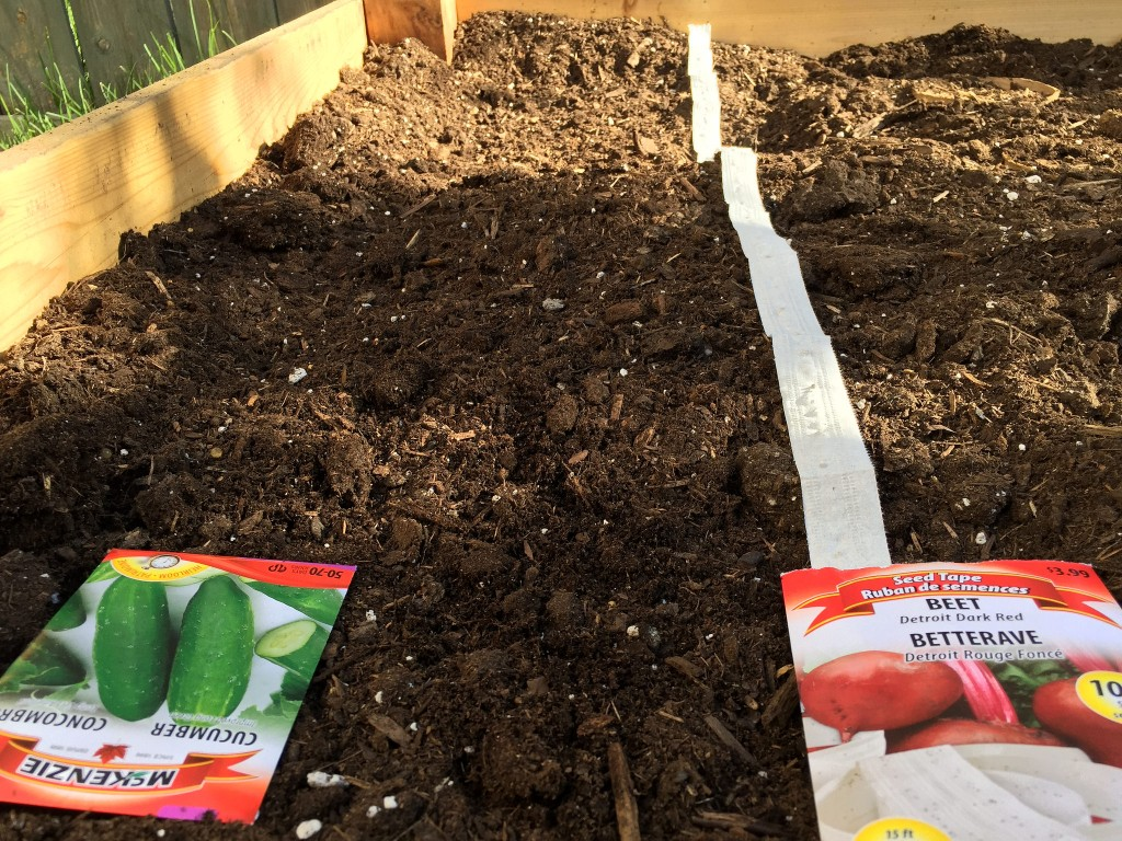 use seed tape in the gardenn