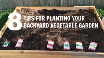 8 Tips For Planting Your Backyard Garden