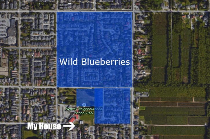 Wild Blueberries in Richmond BC