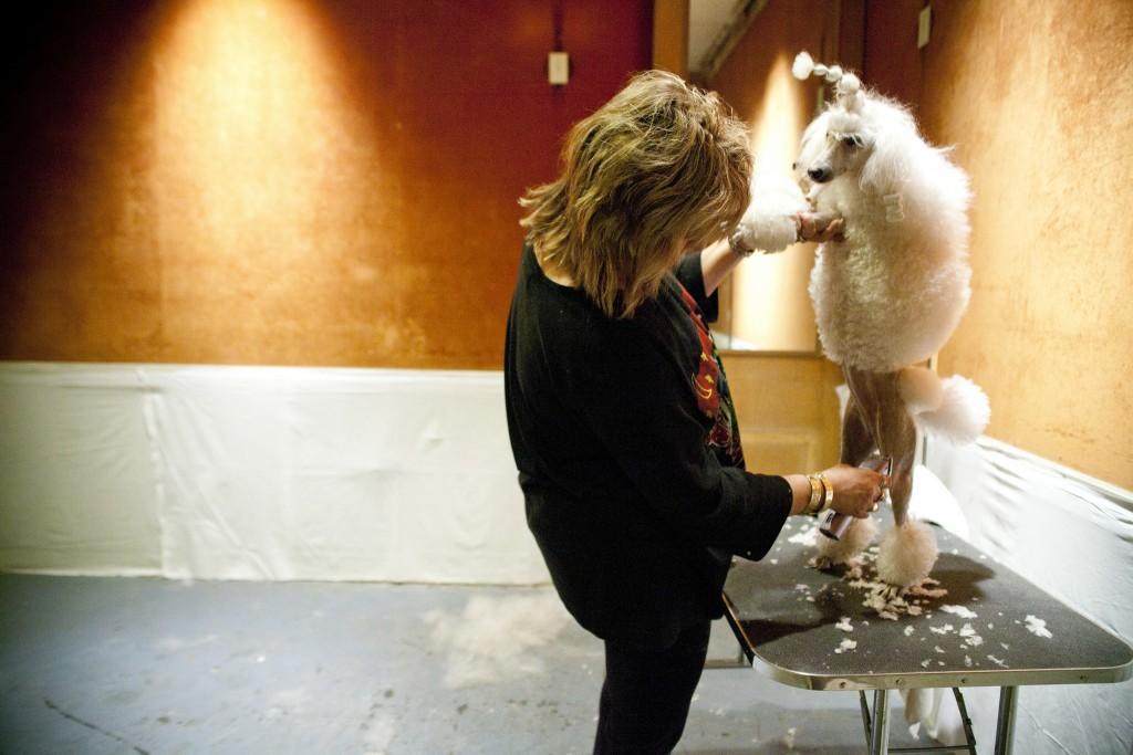 trim the poodle