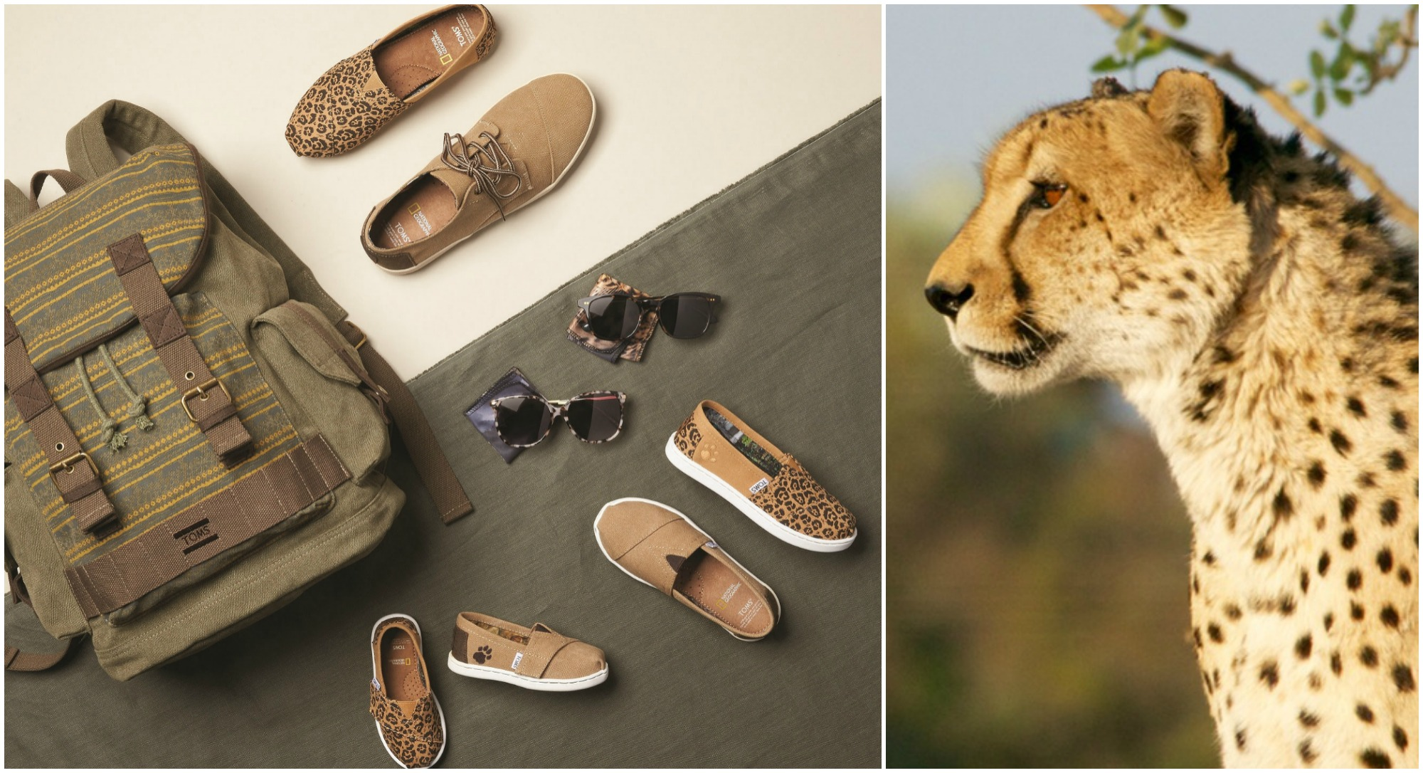 TOMS Big Cat Collection