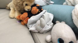 Collection of stuffies brought to the sleepover