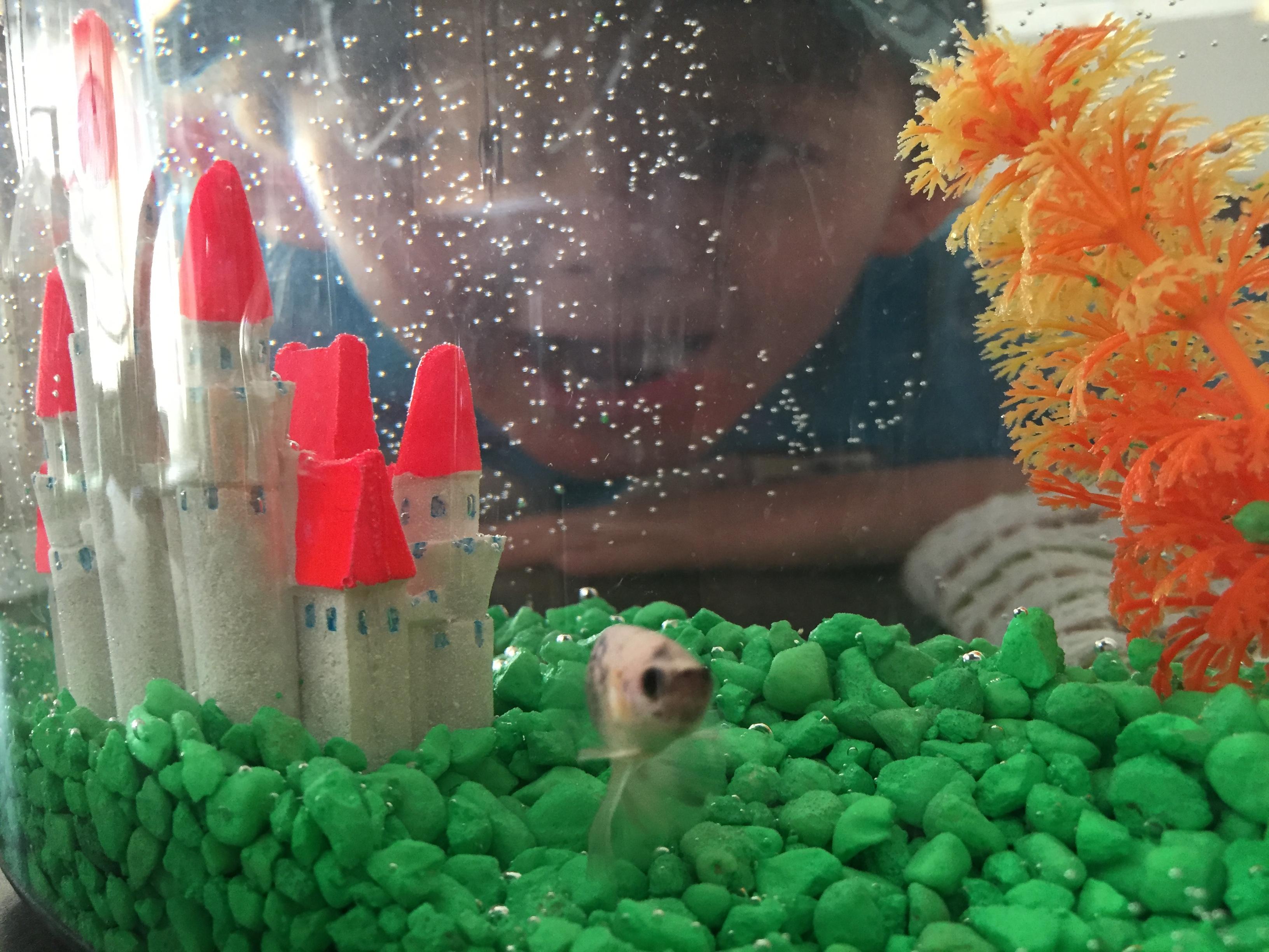 Charllie and his betta fish, Harold.